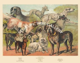 Retriever, Chinese Dog, Coach Dog, Bull Dog, Setter, Pug